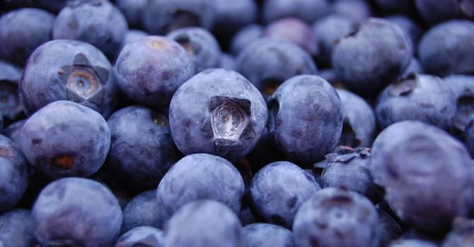 Blueberries, Blueberries, Everywhere! image